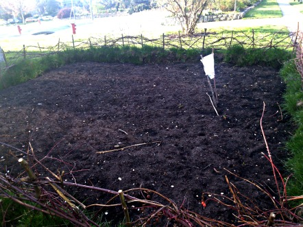 A plot for flax in Maclean Park - aimed at some textile experiment.