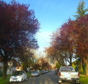Parker street blossoms
