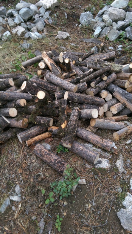 Lots of firewood chopped - six wheelbarrows worth!