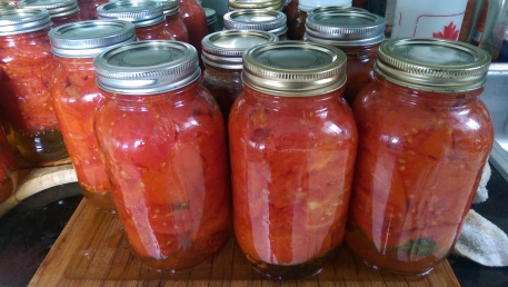 All the tomatoes and tomato sauce for the next year.